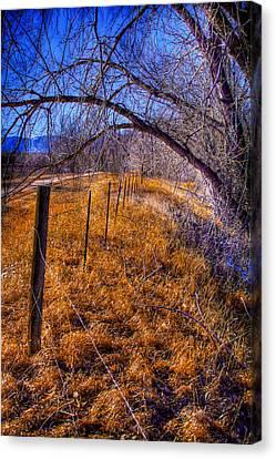 South Platte Fenceline Canvas Print by David Patterson