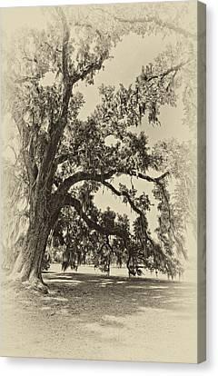 Evergreen Plantation Canvas Print - Southern Comfort Sepia by Steve Harrington