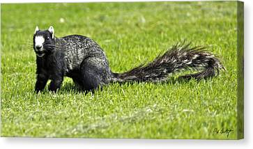 Southern Fox Squirrel Canvas Print by Phill Doherty