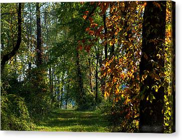 Southern Indiana Fall Colors Canvas Print by Melissa Wyatt