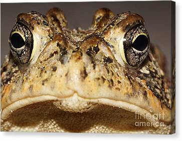 Southern Toad Close Up Canvas Print by Lynda Dawson-Youngclaus