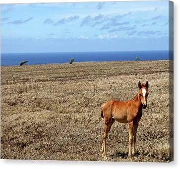 Southernmost Pony Canvas Print by James Mancini Heath