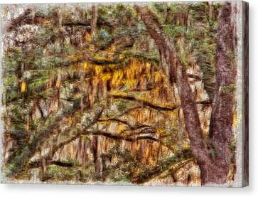 Spanish Moss And Sunset Canvas Print by Tom Culver