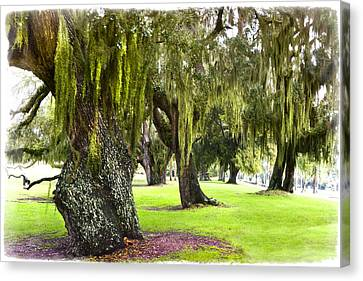 Spanish Moss At Jekyll Island Canvas Print by Debra and Dave Vanderlaan