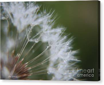 Canvas Print featuring the photograph Sparkle Seeds by Yumi Johnson