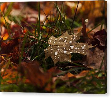 Canvas Print featuring the photograph Sparkling Gems by Cheryl Baxter