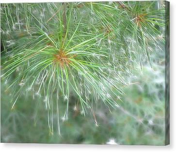 Sparkly Pine Canvas Print