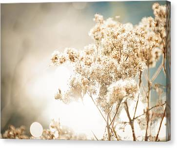 Canvas Print featuring the photograph Sparkly Weeds by Cheryl Baxter
