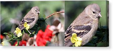 Canvas Print featuring the photograph Sparrow With Detail by Mark J Seefeldt