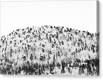 Sparse Mountain Forest In Norwegian Winter Canvas Print by Raphael Schneider