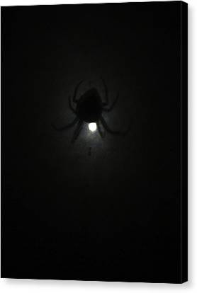 Spider In The Moonlight Canvas Print by Kym Backland