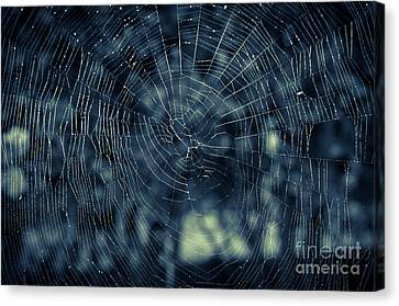 Canvas Print featuring the photograph Spider Web by Matt Malloy