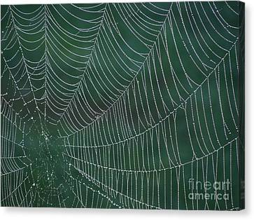 Spider Web With Dew Drops Canvas Print by Chad and Stacey Hall