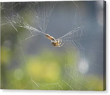 Canvas Print featuring the photograph Spider's Pantry by Bonnie Muir