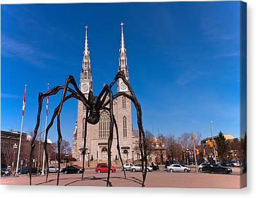 Canvas Print featuring the photograph Spidy by Josef Pittner