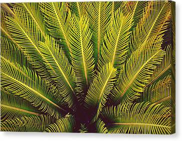 Spiked Leaves Canvas Print by Sumit Mehndiratta