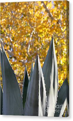 Spikes And Leaves Canvas Print