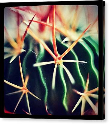 #spikes #green #plant #igaddict Canvas Print by Ritchie Garrod