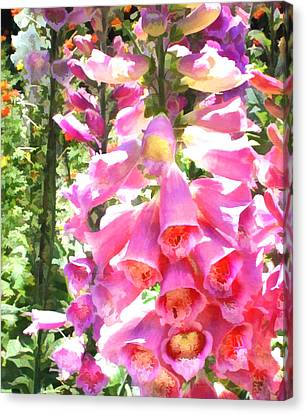 Spikes Of Pink Foxgloves Canvas Print by Elaine Plesser