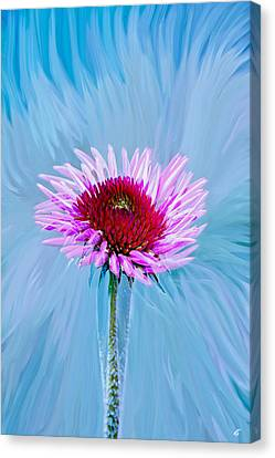 Spin Me Canvas Print by Linda Sannuti