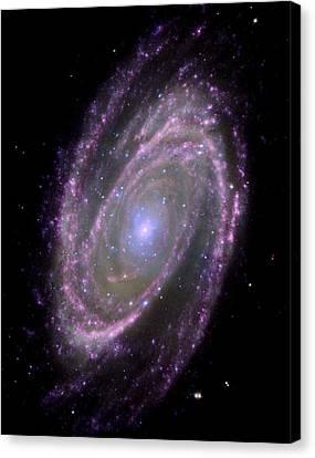 Spiral Galaxy M81, Composite Image Canvas Print by Nasacxcesajpl-caltechs Markoff Et Al