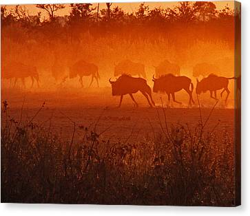 Canvas Print featuring the photograph Spirit Dance by William Fields