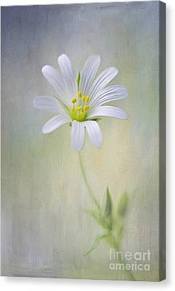 Spirit Of Spring Canvas Print by Jacky Parker