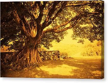 Spiritual Place. Wicklow Mountains. Ireland Canvas Print by Jenny Rainbow