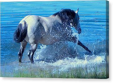 Splashing Horse Canvas Print by FeVa  Fotos