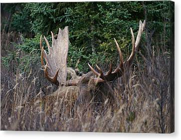 Canvas Print featuring the photograph Splendor In The Grass by Doug Lloyd