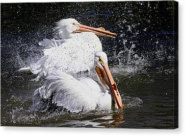 Canvas Print featuring the photograph Splish Splash by Elizabeth Winter