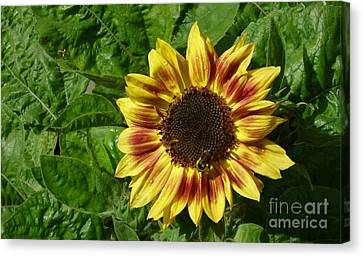 Canvas Print featuring the photograph Spot The Bee by Jim Sauchyn