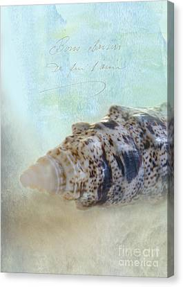 Spotted Auger Seashell Canvas Print by Betty LaRue
