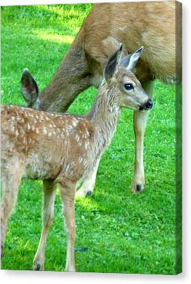 Canvas Print featuring the photograph Spotted Fawn And Doe by Cindy Wright