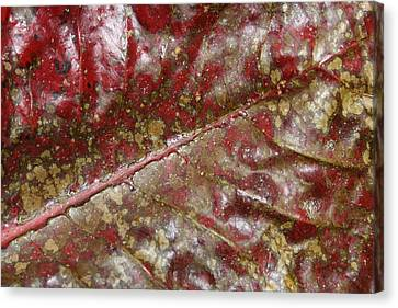 Spotted Red Leaf Canvas Print