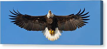Canvas Print featuring the photograph Spread Eagle by Randall Branham