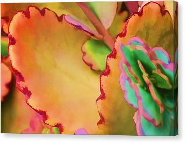 Spring 2 Canvas Print by Dawn Nicoli