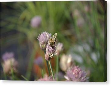 Canvas Print featuring the photograph Spring Bee by Serene Maisey