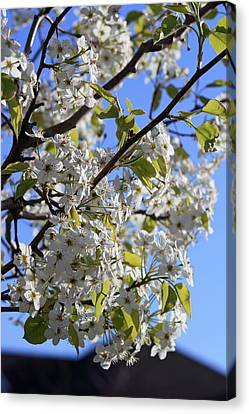 Canvas Print featuring the photograph Spring Blooms by Kay Novy
