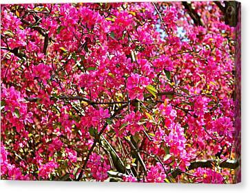 Spring Blossom Canvas Print by Felix Zapata
