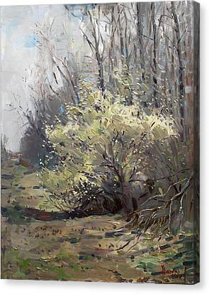 Apartment Canvas Print - Spring Blossom  by Ylli Haruni