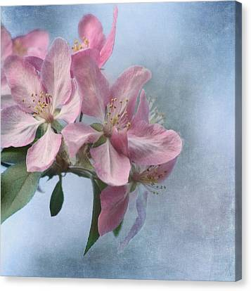 Spring Blossoms For The Cure Canvas Print by Kim Hojnacki