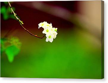 Spring Bud Canvas Print by Bret Worrell