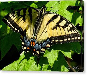 Spring Butterfly Canvas Print by Debra     Vatalaro