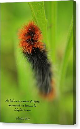 Spring Caterpillar Canvas Print by Tyra  OBryant