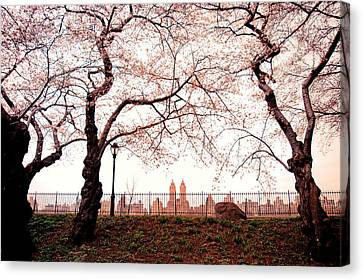 Spring Cherry Blossoms - Central Park Reservoir Canvas Print by Vivienne Gucwa