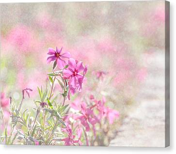 Spring Comes Gently Canvas Print
