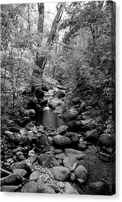 Spring Creek Canvas Print by Kathleen Grace