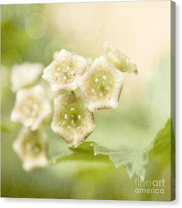 Spring Currant Blossom Canvas Print
