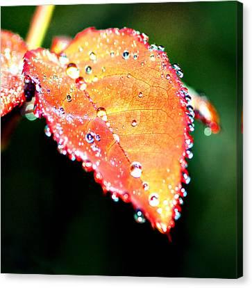 Spring Dew Canvas Print